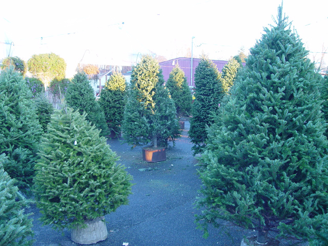 Cut Your Own Christmas Tree Long Island.Welcome To Olish Farms Country Market And Bakery